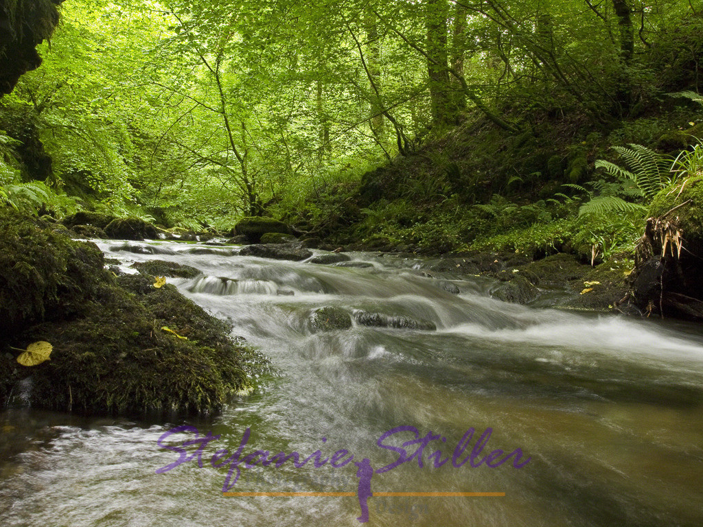 Sattes Grün der Lydforge Gorge | In der Nähe des Dartmoor finden sich die Lydforge Gorge