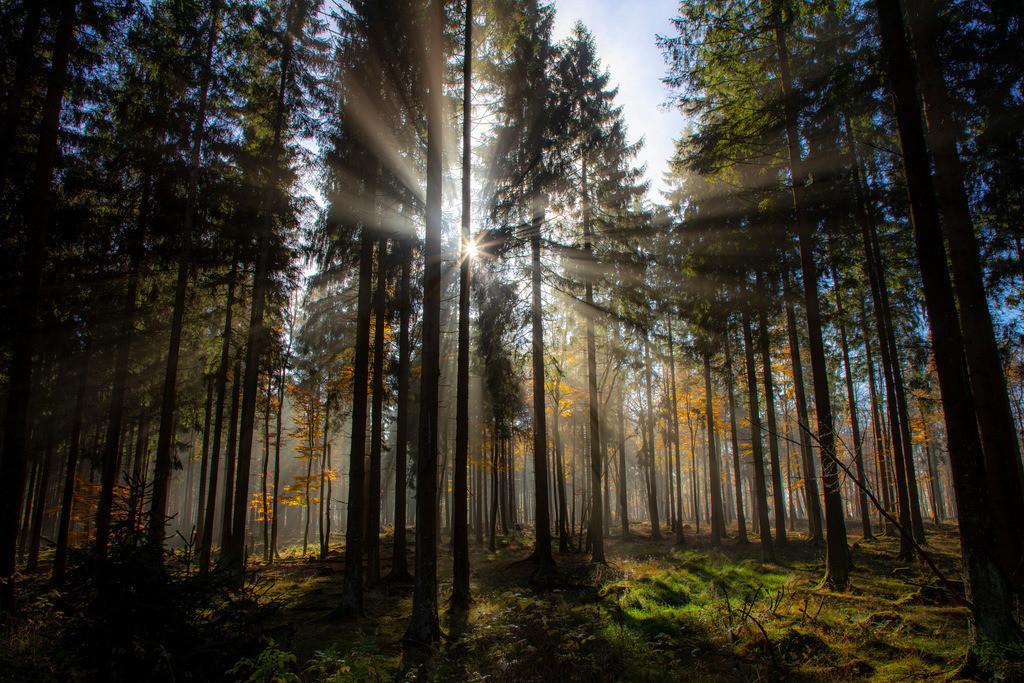 JT-181107-022 | Herbst, Nebel, die Sonne bricht gerade durch den Dunst, Landschaft, Wald, in der Nähe von Jagdhaus, Schmallenberg, Sauerland, NRW, Deutschland, Europa.