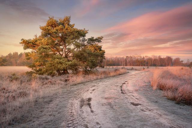 Winter am Moor | Der europäische Winter hat den Vorteil, dass man für einen Sonnenaufgang nicht sehr früh aufstehen muss. Wenn dann zudem solche Farben den Himmel explodieren lassen, muss die Landschaft gar nicht mehr soviel beitragen.
