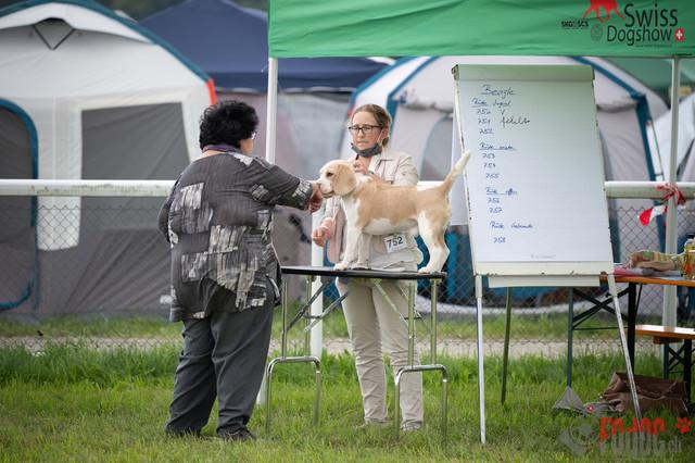 Hundeausstellung CACIB Fehraltorf SUMMER   CACIB Fehraltorf SUMMER in Fehraltdorf  27.08.2021 Foto: Leo Wyden