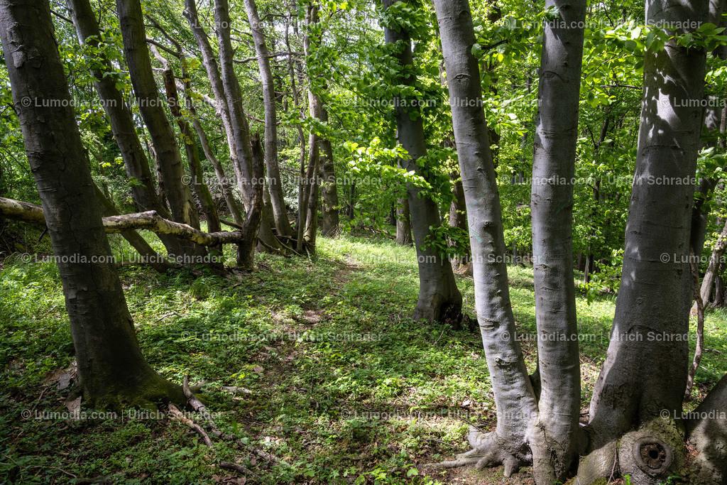 10049-12269 - Wald bei Eilenstedt