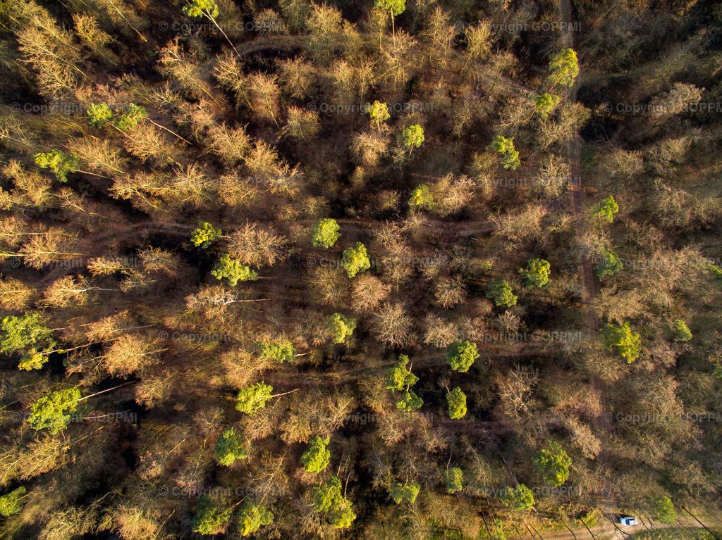 Nr. 26 Wald DJI_0568