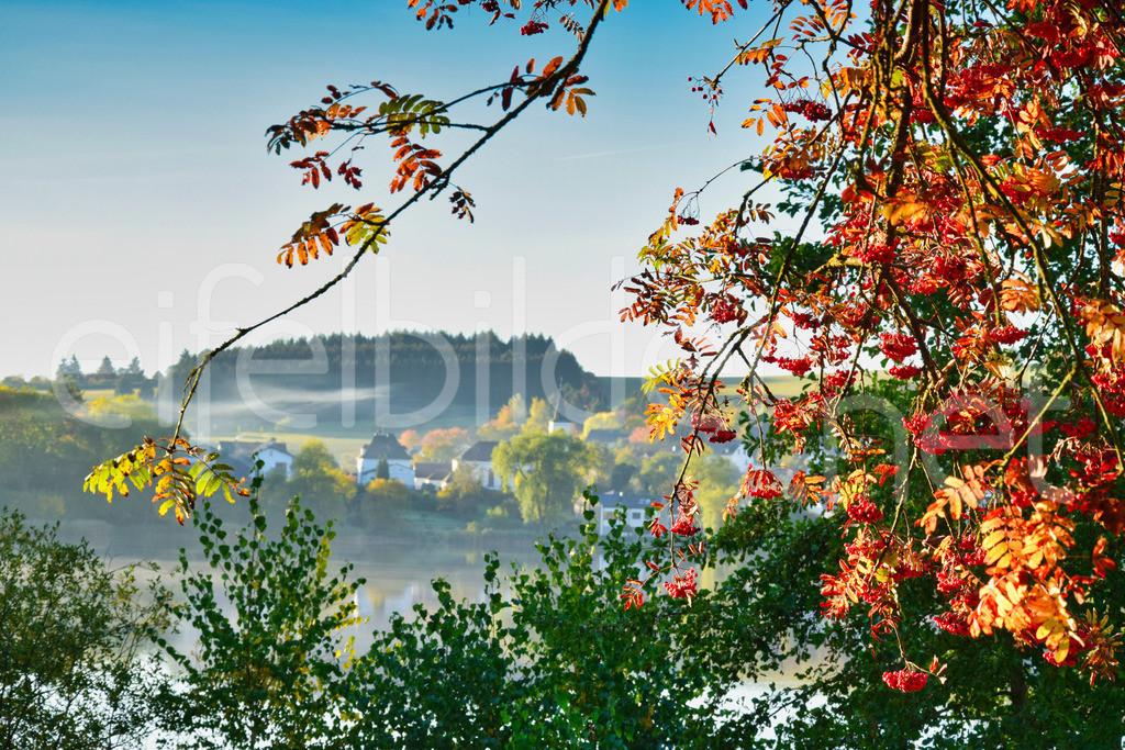 Herbstmorgen in Schalkenmehren | Daun Schalkenmehren, idyllische Morgenstimmung mit leuchtenden Herbstfarben und einem Hauch von geheimnisvollen Morgennebel, der das Dorf romantisch - verträumt wirken lässt