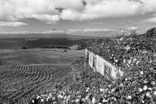 Azoren - Haus mit Blumen und Inselblick | Blick von der Azoren-Insel Sao Jorge zur Nachbarinsel Pico, kontrastreiches Schwarzweißbild, im Vordergrund ein von Blumen überwachsenes Haus, über Felder und Hügel geht der Blick über das Meer zum teilweise in Wolken gehüllten Vulkanberg