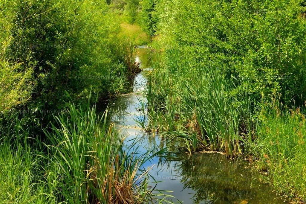 Little stream with water plants - Kleiner Flußlauf mit Wasserpflanzen