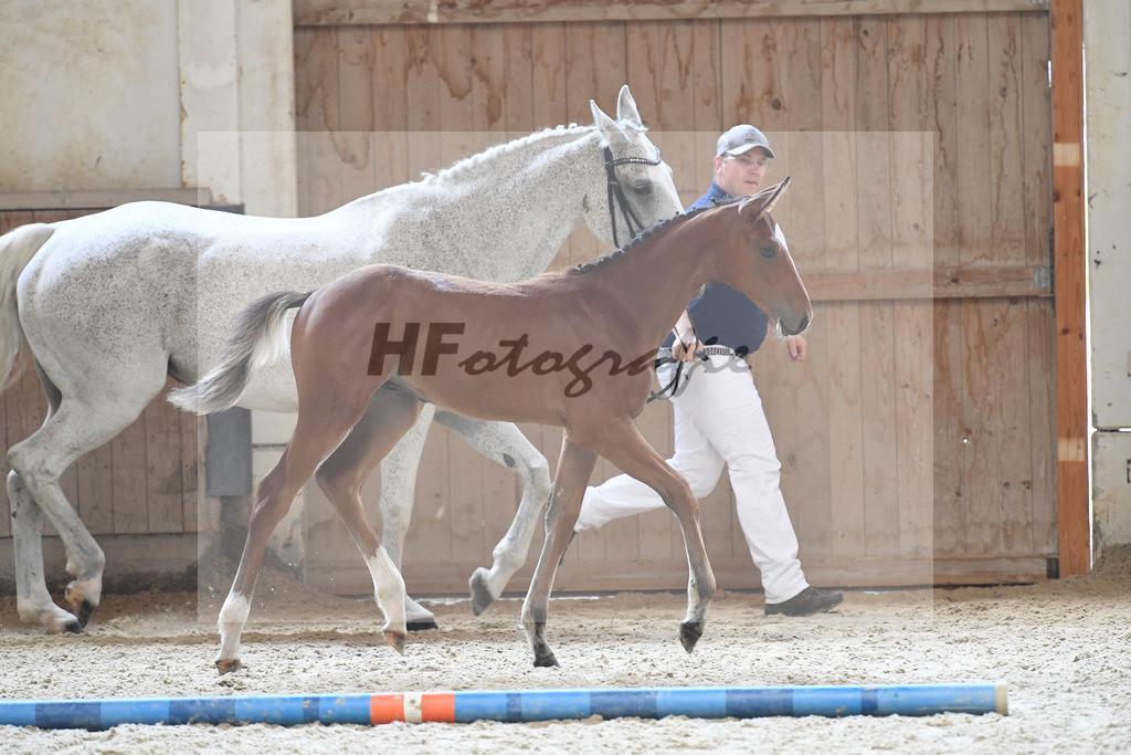 Kat-Nr. 1 HF Action Blue_Kreppert_3221003