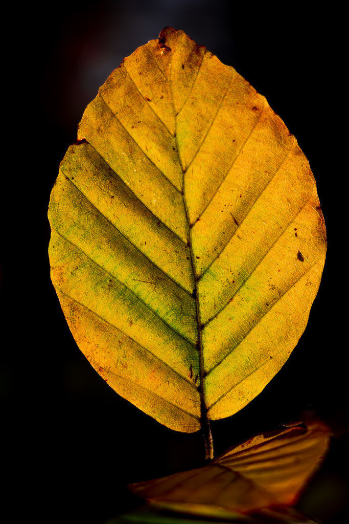 Die Farben des Herbstes | The #Colours of #Autumn