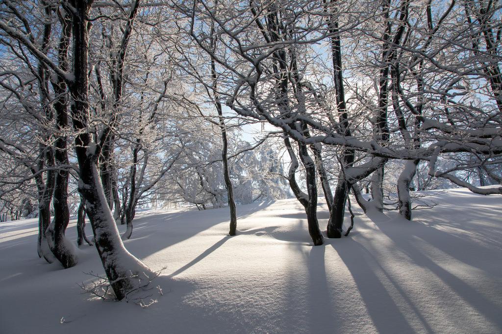 JT-170116-146 | Winter auf dem Kahlen Asten, Sauerland, höchster Berg in NRW, tief verschneite Landschaft
