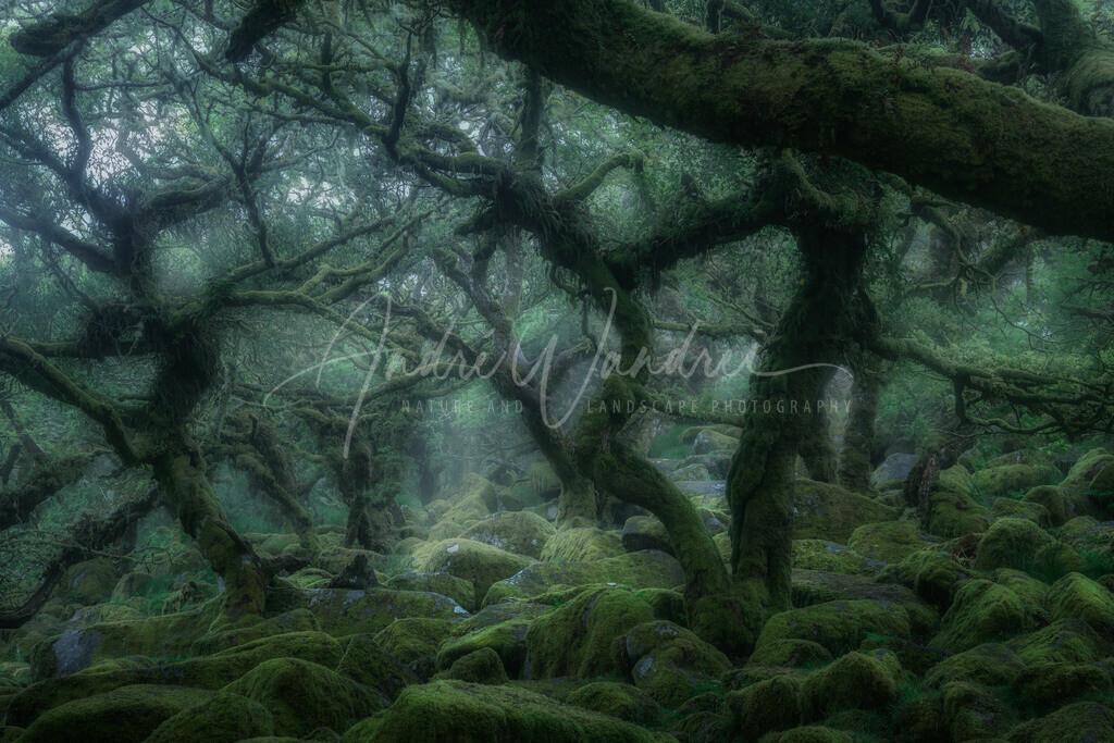Geisterbäume