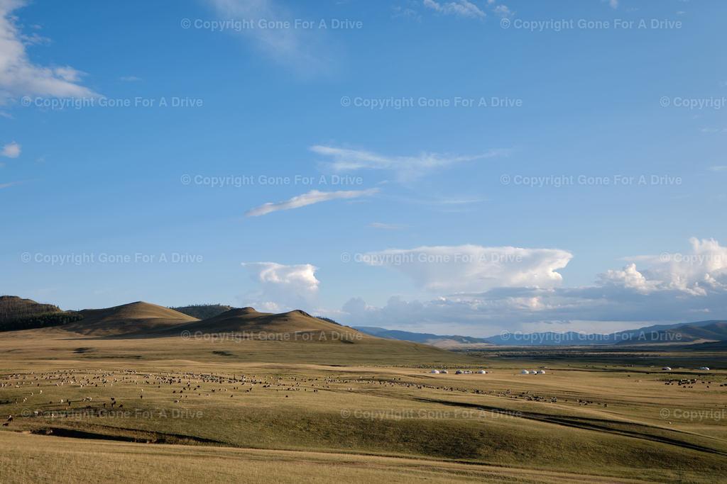 Mongolei   Monglische Gras- und Hügellandschaft mit Tierherden und Jurten
