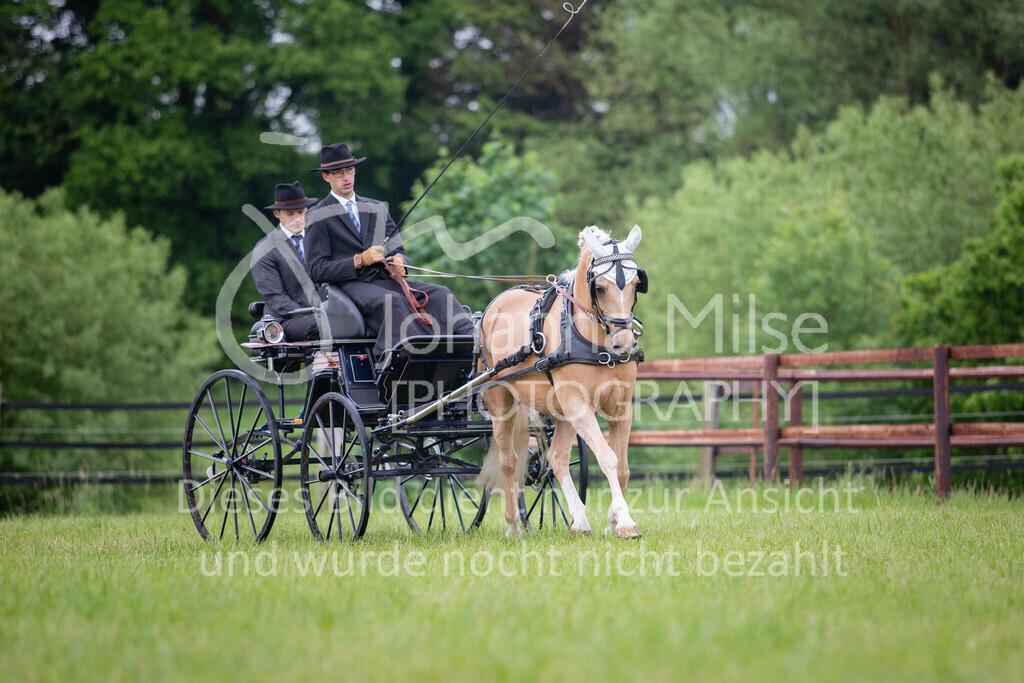 190525_Fahren-014 | Pferdesporttage Herford 2019 Fahren