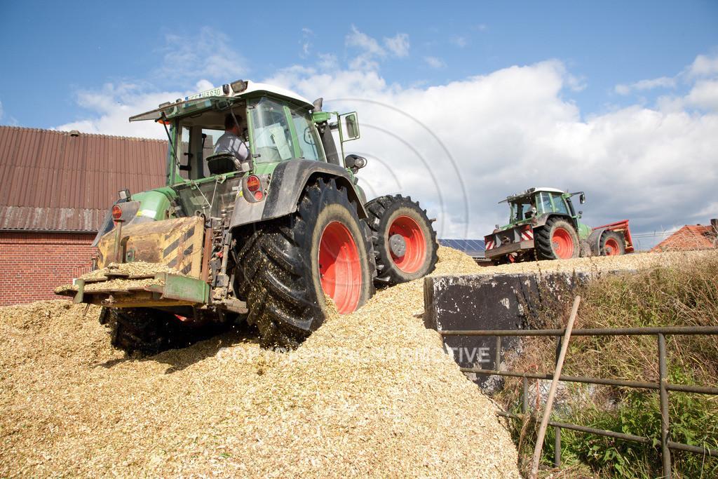 20080914-IMG_9122 | Silomais wird gehäckselt - AGRARFOTO Bilder aus der Landwirtschaft