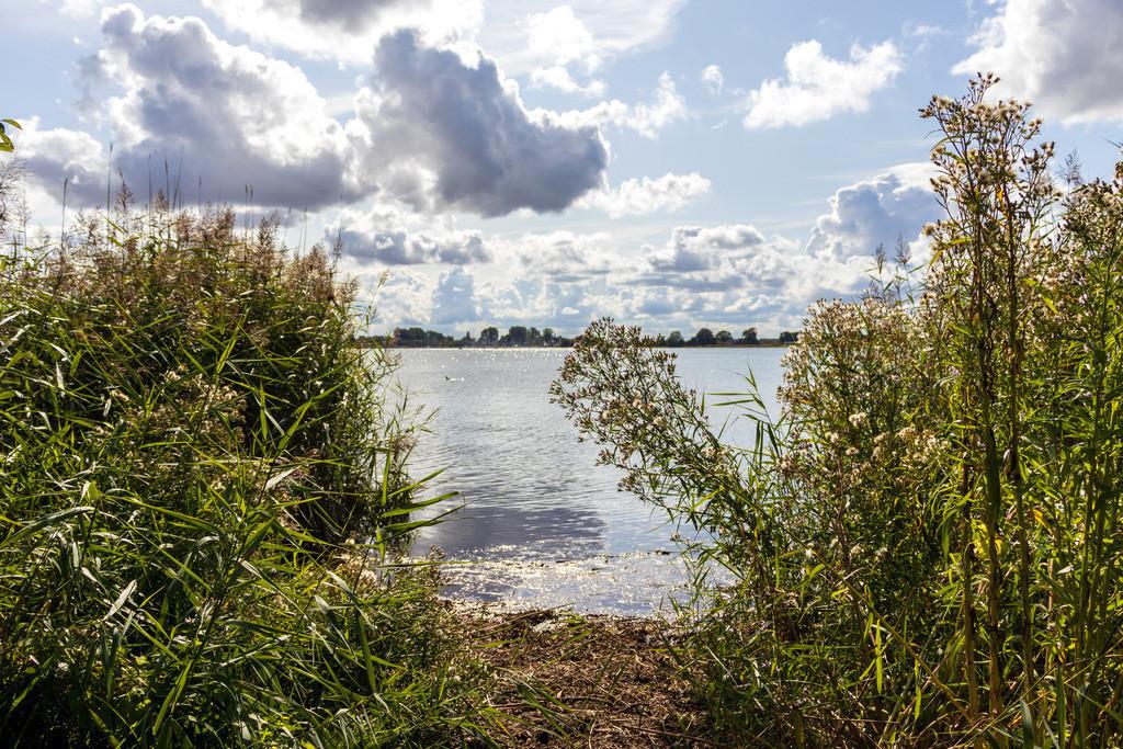 Kopperby an der Schlei | Ufer in Kopperby an der Schlei