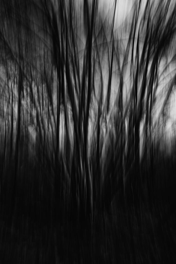 Wald | wald,bäume,erde,wasser,luft.leben,himmel,sauerstoff
