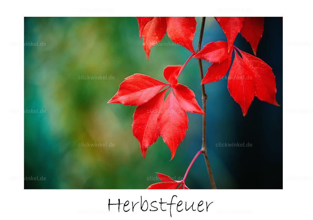 print_Herbstfeuer