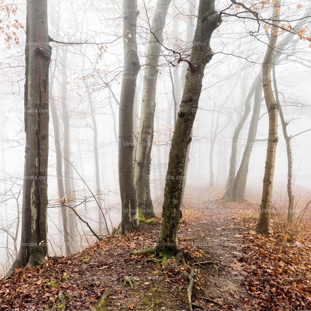 10049-10278 - Herbstwald im Nebel | max. Auflösung 7360 x 4912