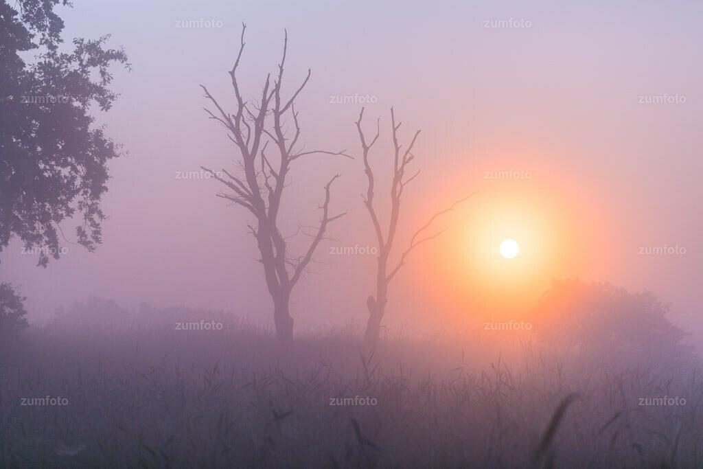 0-130708_0433-9163 | --Dateigröße 5760 x 3840 Pixel-- Sonnenaufgang im Nebel.