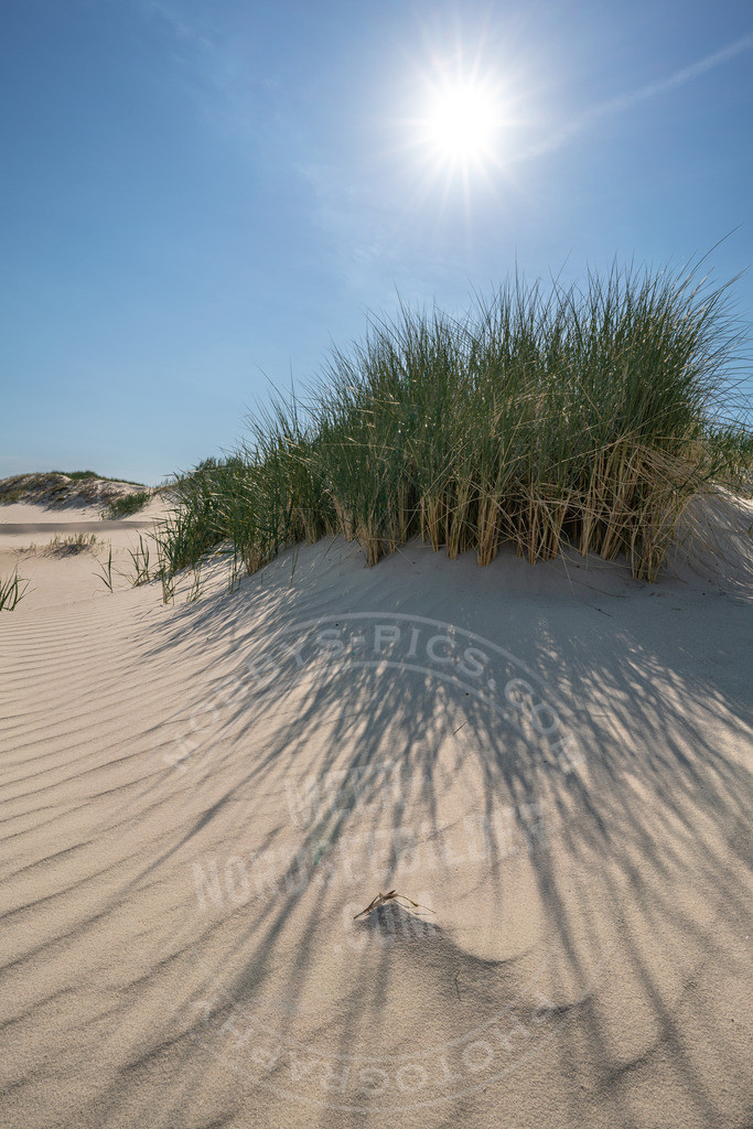 DSC5962 | Sonnenstern am Strand