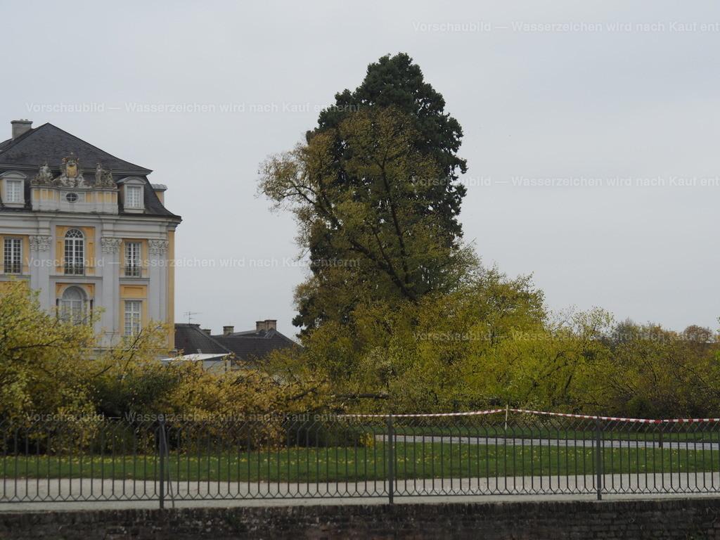 Last tree falling (8/10)