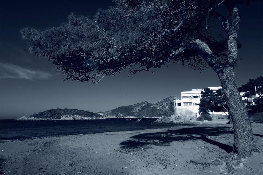 Pinienstrand | Pinie mit Schatten  am Strand auf Mallorca, schwarz/weiss
