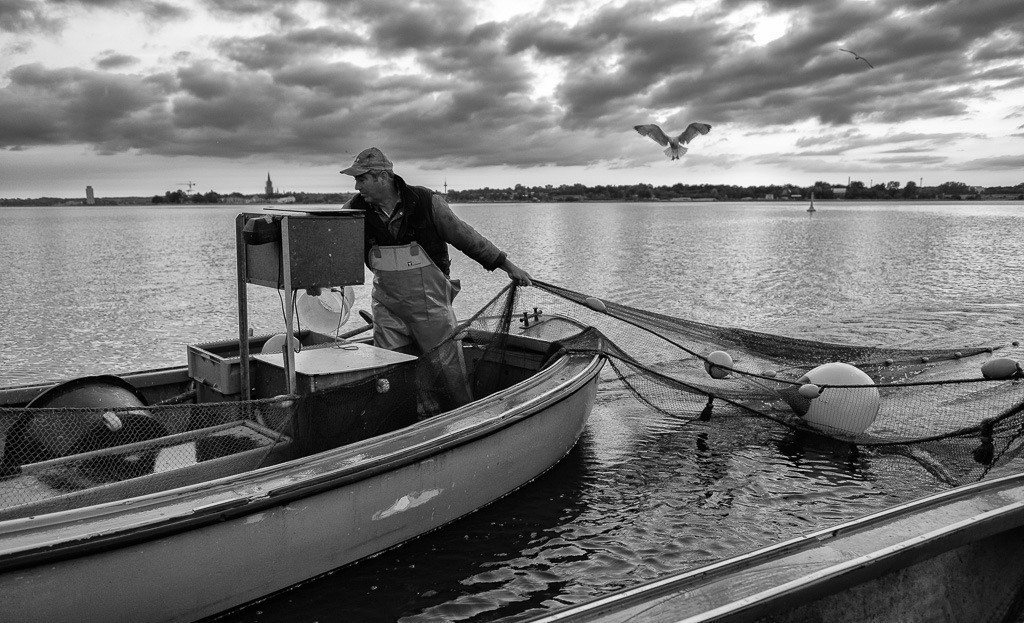 Wadenfischen auf der Schlei © Holger Rüdel | Der Schleswiger Fischermeister Jörn Ross beim Einholen eines Wadennetzes auf der Kleinen Breite der Schlei. Höchste Konzentration ist gefragt. Jeder Griff muss sitzen.