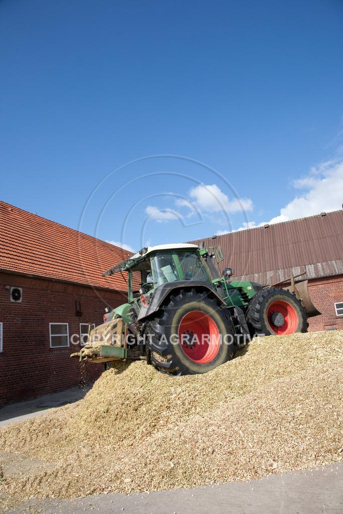 20080914-IMG_9119 | Silomais wird gehäckselt - AGRARFOTO Bilder aus der Landwirtschaft