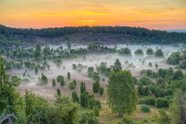 Totengrund in der Lüneburger Heide   Blick in den Totengrund, einem Talkessel in der Lüneburger Heide. Leichter Nebel bedeckt den Grund während am Himmel langsam die Sonne aufgeht. Die Heide ist in voller Blüte. Für solch einen Anblick lohnt sich der 4 km lange Fußmarsch durch den dunklen Wald, noch lange bevor die Dämmerung einsetzt.