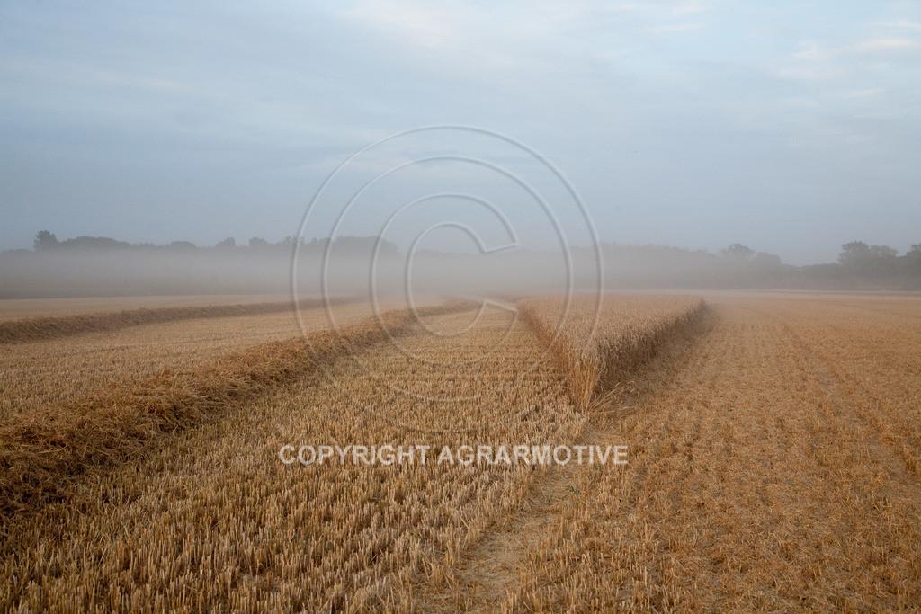 20120817-_MG_8747 | Weizenernte in der Dämmerung