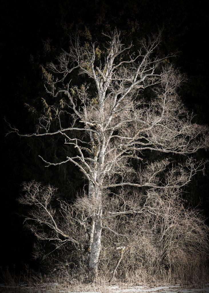 Night Light | Analogfotografie mit einer meiner mindestens 50 Jahre alten Kameras.