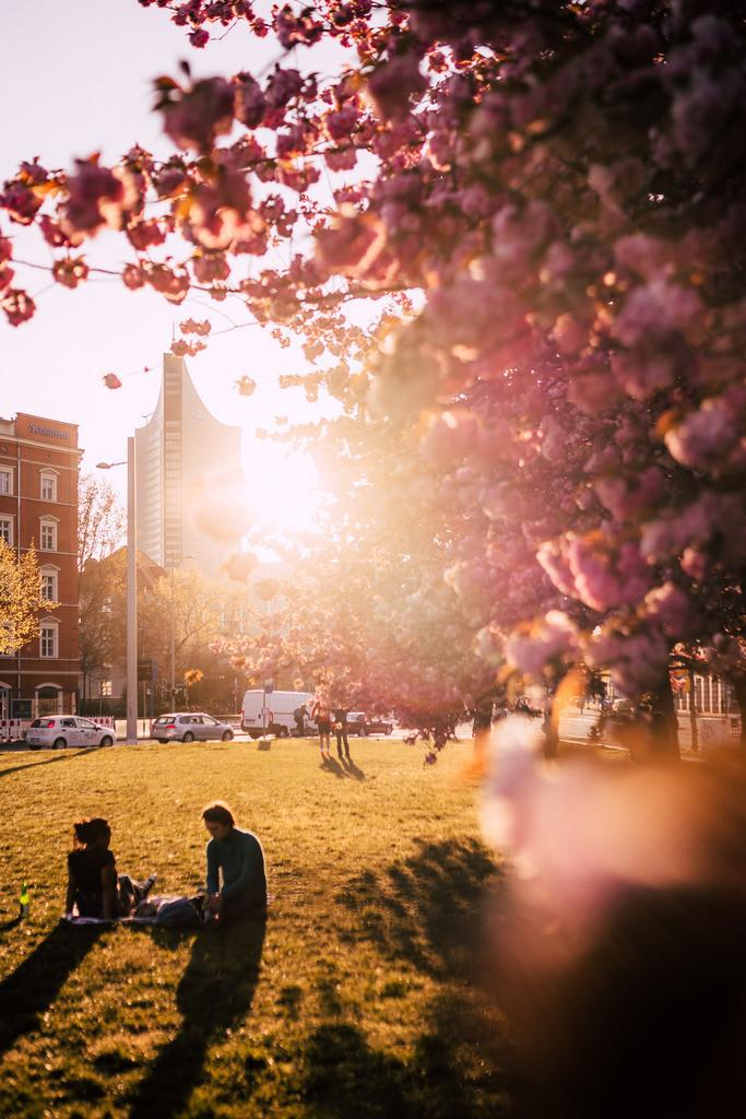 Kirschblüten Johannisplatz 2020 (1)