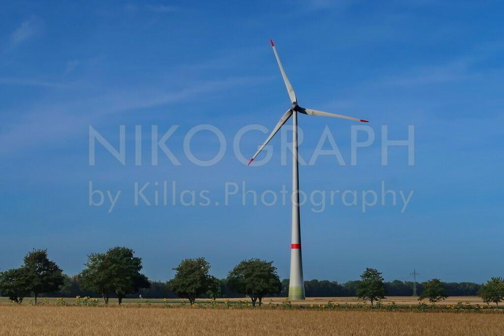 Windrad | Windrad im Feld bei Bad Wünnenberg.
