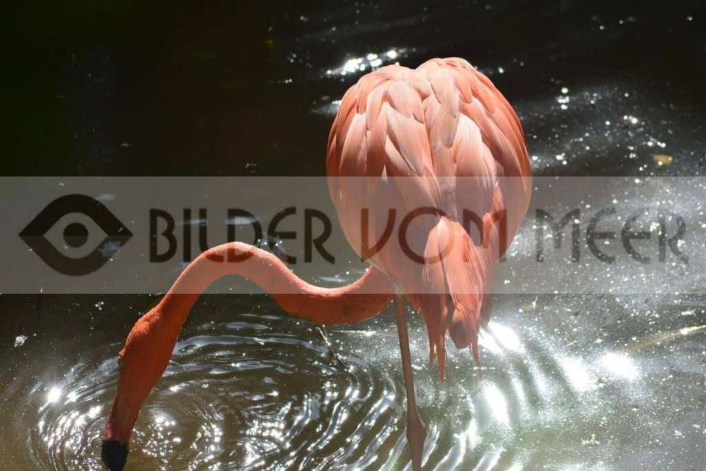 Fotoausstellung Meer Bilder | Flamingo in der Abendsonne