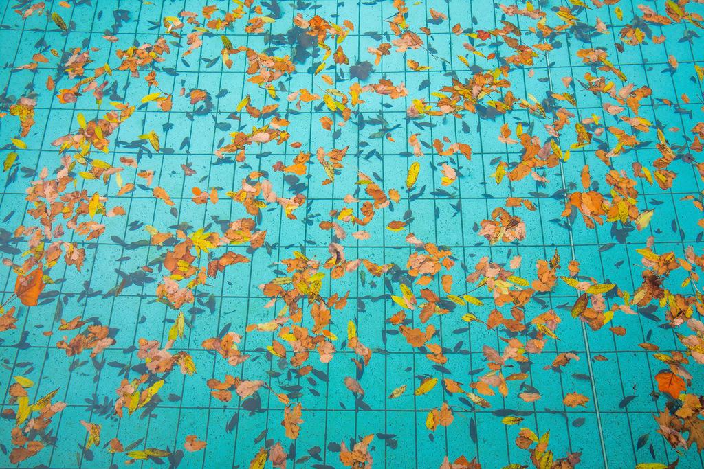 JT-171024-100 | Freibad, leer, Saisonende, Herbst, verlassen, Herbstlaub, Blätter im Wasser des Schwimmbeckens,