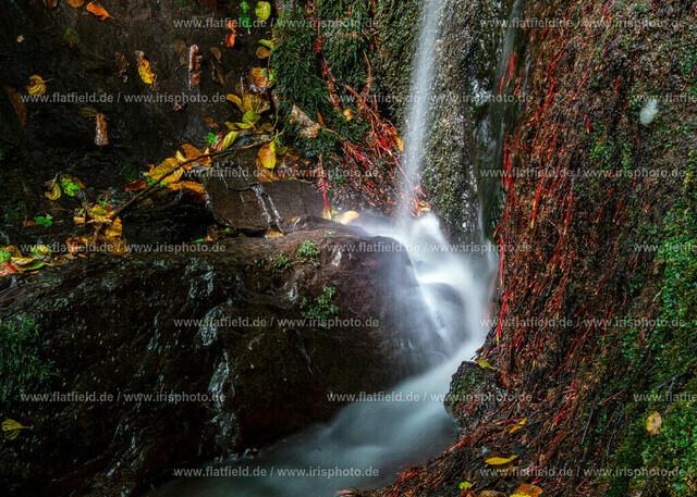 Wasserleuchten | Pulsbachtal
