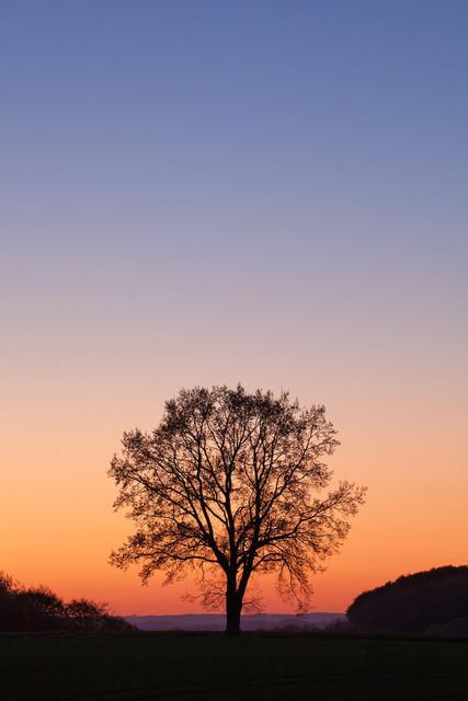 Baum vor Abendhimmel