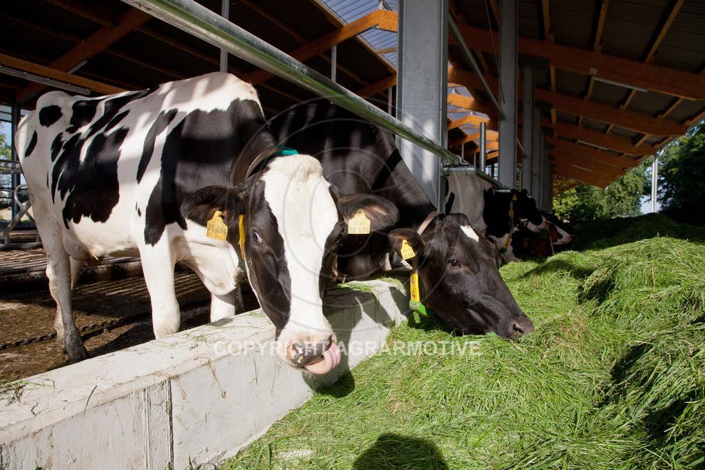20110627-IMG_2999 | Milchkühe im Boxenlaufstall