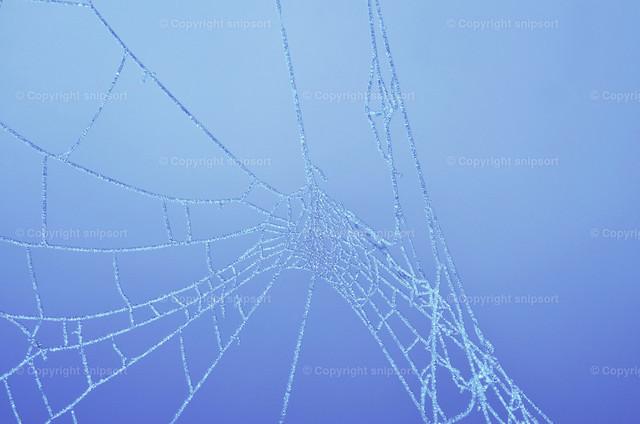Gefrorene Spinnweben | Gefrorene Spinnweben über blauem Hintergrund.