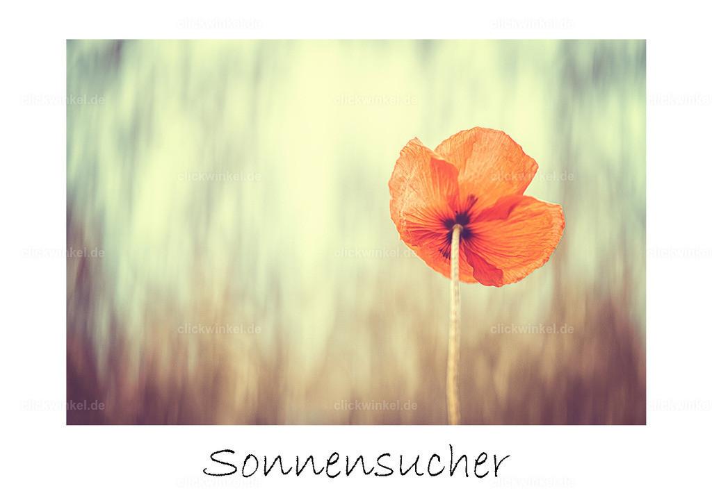 print_Sonnensucher
