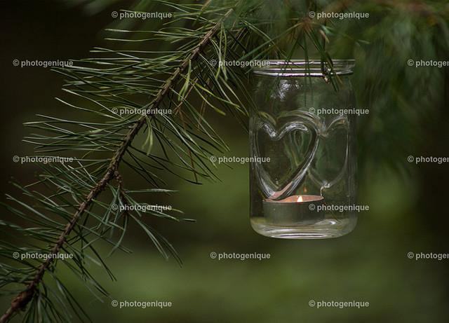 Windlicht hängt an Kiefer-Zweig | Ein Windlicht mit Herz-Motiv und brennender Kerze hängt an einem Kiefer-Zweig vor einem gründen Hintergrund bei Tageslicht