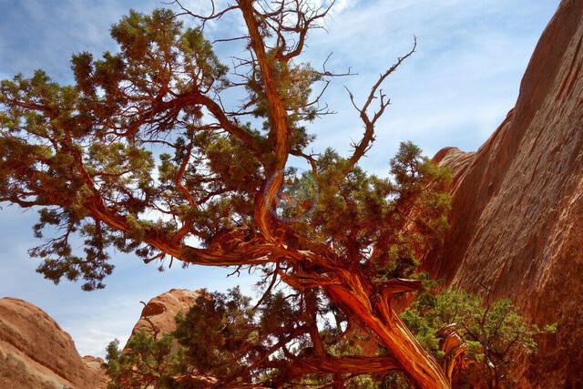Arches National Park Utah   USA, USA, Utah, 05.08.2012, Arches National Park Utah, © 2012 Christoph Hermann, Bild-Kunst Urheber 707707