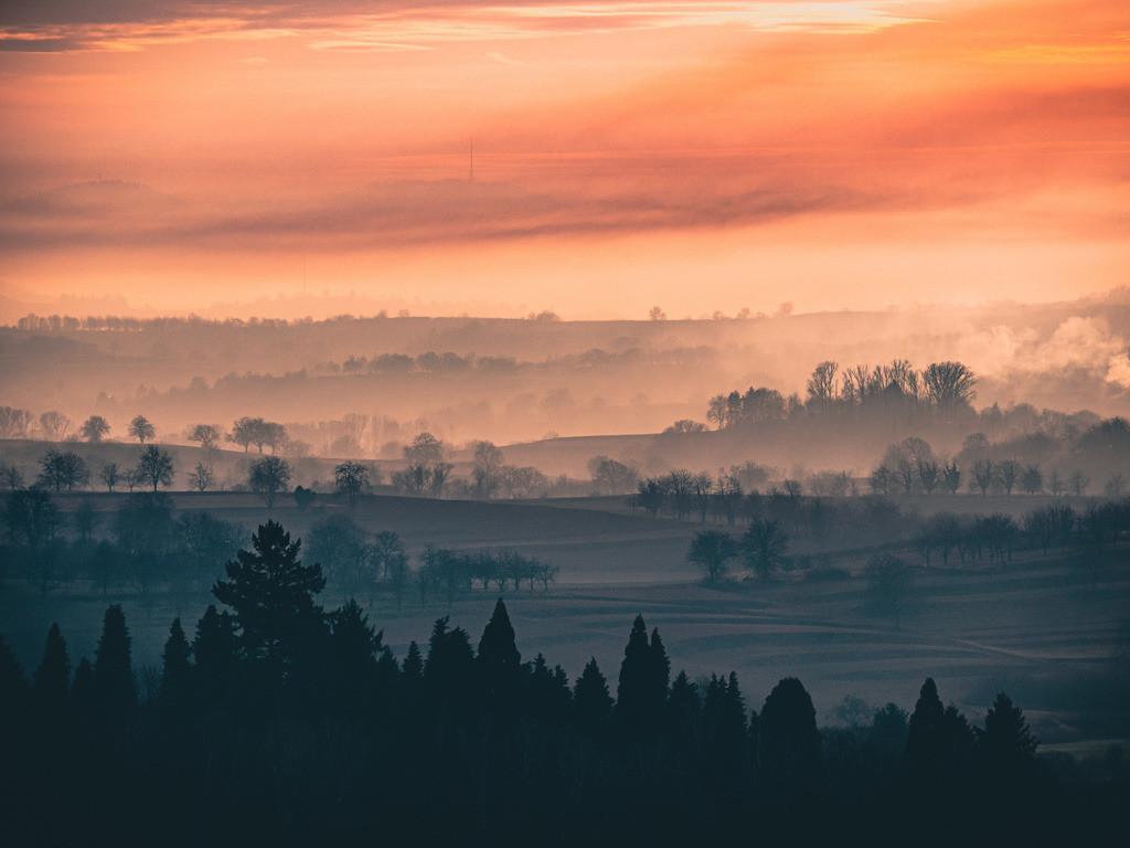 Herbst in der Ortenau | Spätherbstliche Lichtstimmung in den Weinbergen der Ortenau bei Kippenheim