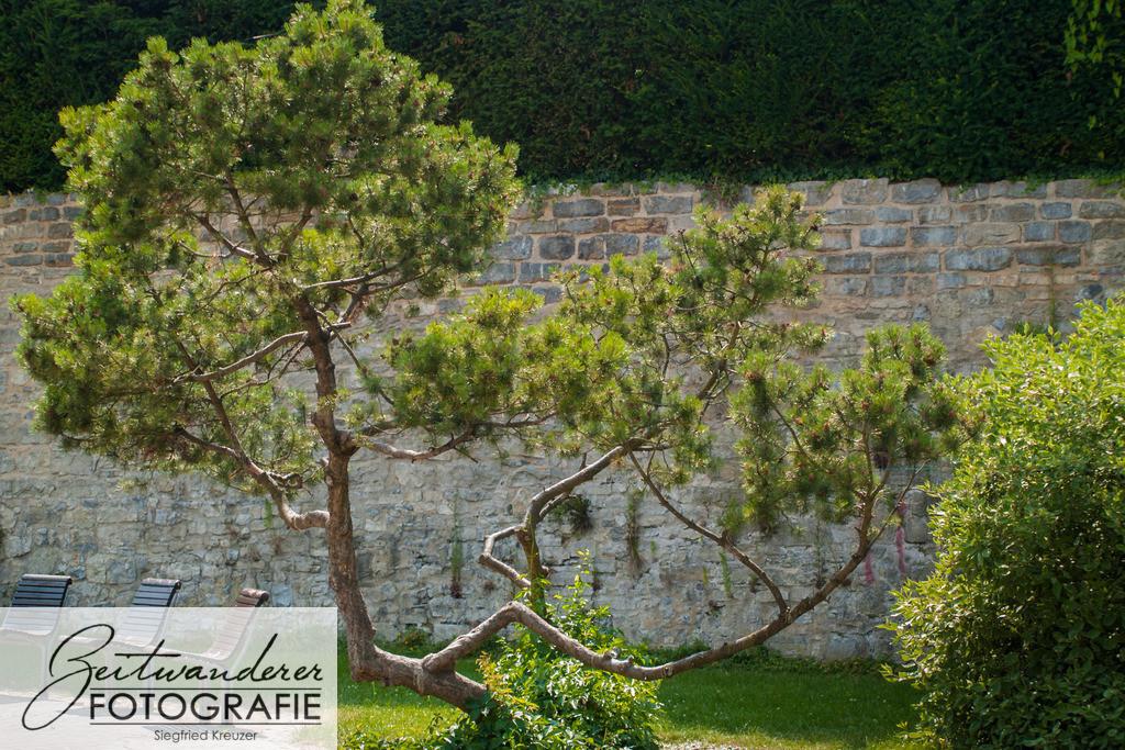 Baum-120   OLYMPUS DIGITAL CAMERA