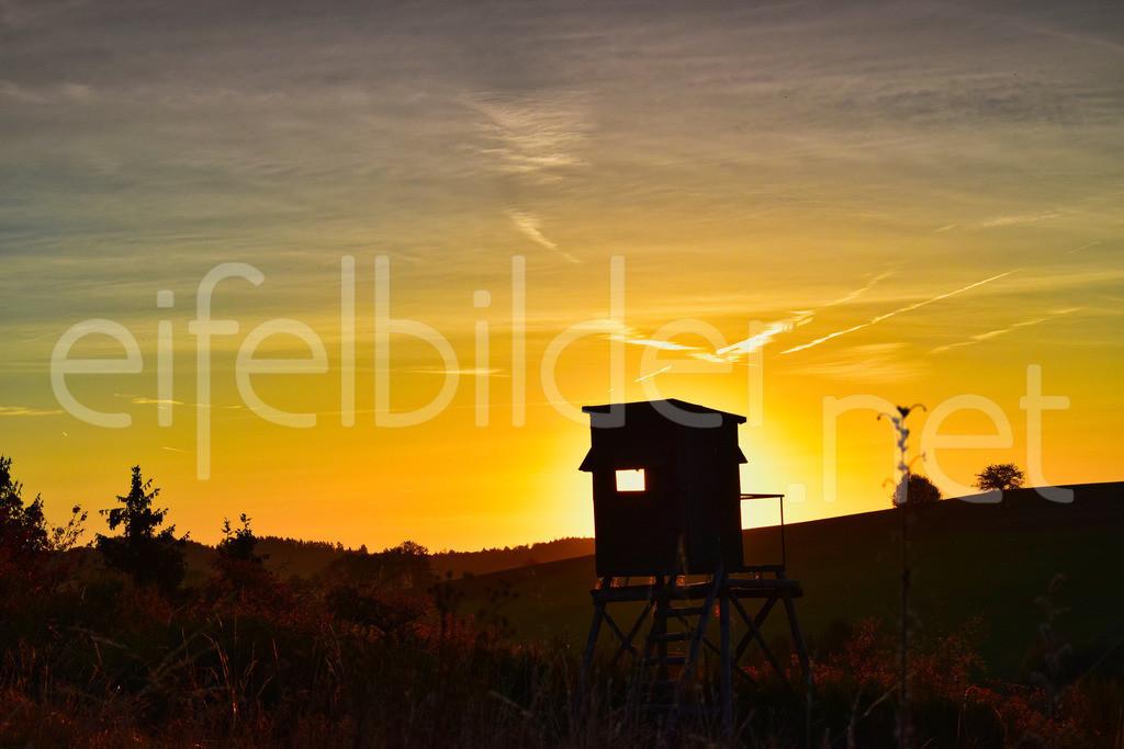 Leuchtender Sonnenaufgang | goldene Stunde in Daun Schalkenmehren