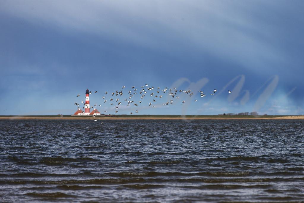 Westerhever Leuchtturm | Nordsee und Möwen vor Westerheversand