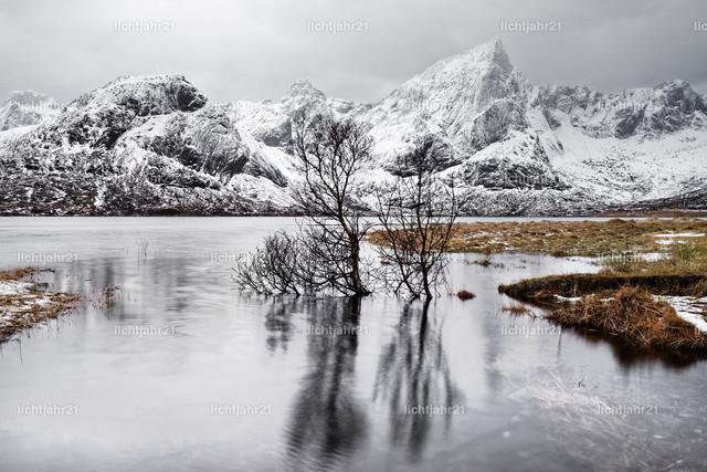 Baumspiegelung im See vor einer winterlichen Bergkette | Bäume stehen im Wasser, markante Spiegelung, Eislandschaft mit Bergen im Hintergrund, grauer Himmel - Location: Norwegen, Lofoten