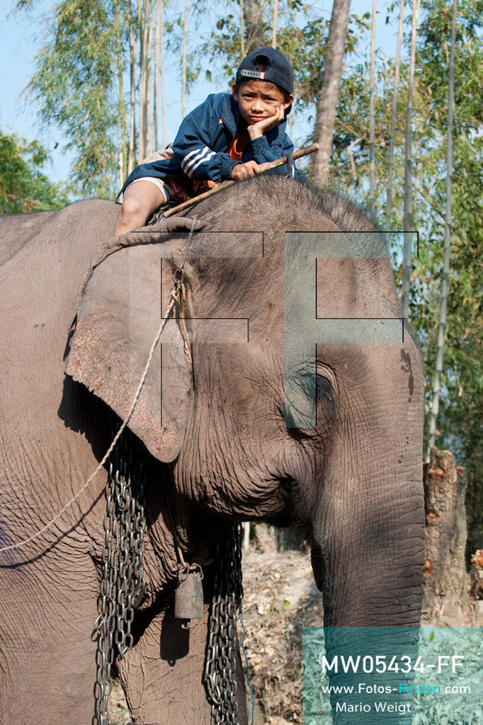 MW05434-FF | Laos | Provinz Sayaboury | Vieng Keo | Reportage: Pey Wan im Elefantendorf | Pey Wan auf dem Elefant Boun Van.  Der achtjährige Pey Wan lebt im Elefantendorf Vieng Keo im Nordwesten von Laos. Im Dorf wohnen ca. 500 Leute mit 17 Arbeitselefanten. Sein Vater Hom Peng hat einen 31 Jahre alten Elefantenbullen namens Boun Van, mit dem er im Holzfällercamp im Dschungel arbeitet. Zum Elefantenfest schmückt Pey Wan den Jumbo und darf mit ihm an der Prozession durchs Dorf teilnehmen. Pey Wan möchte, wie sein Vater, später auch Elefantenführer werden.  ** Feindaten bitte anfragen bei Mario Weigt Photography, info@asia-stories.com **
