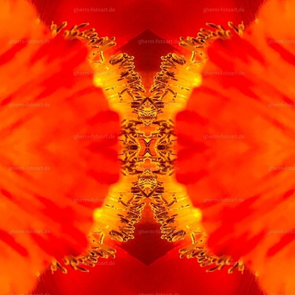 IMG00156-LR-korr-q-lmnr-kaleidoskop-3