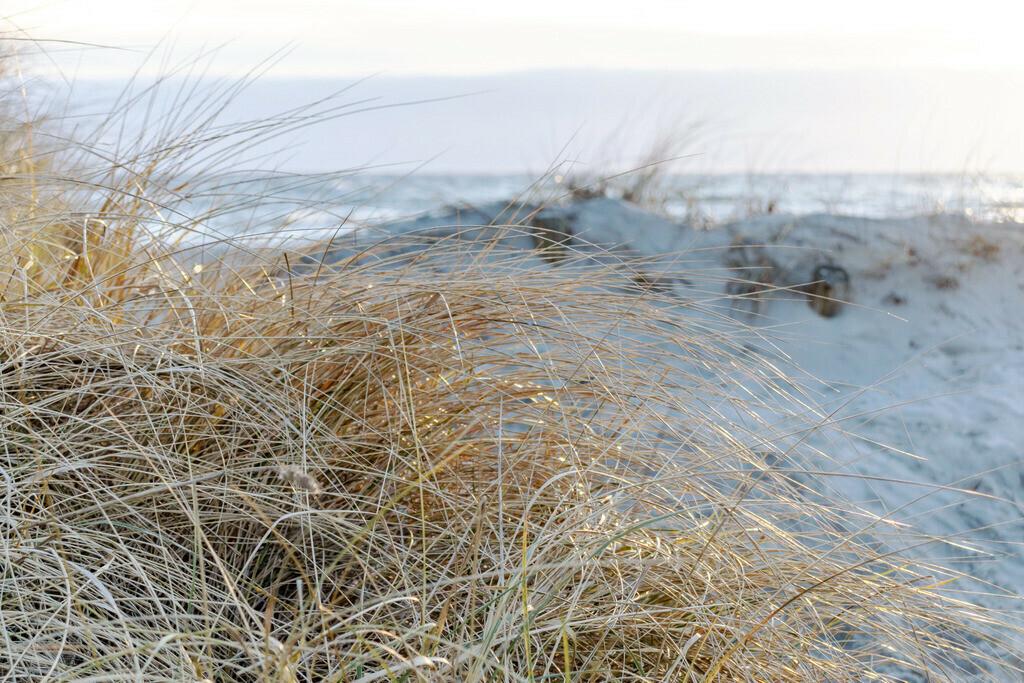 Strandhafer an der Ostsee | Sandstrand mit Dünen und Strandgras