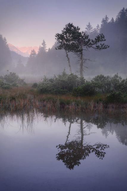 Nebelmoor | Die Sonne küsste bereits die Berggipfel, aber unten im Tal lag noch schwer der Nebel über dem Moor.