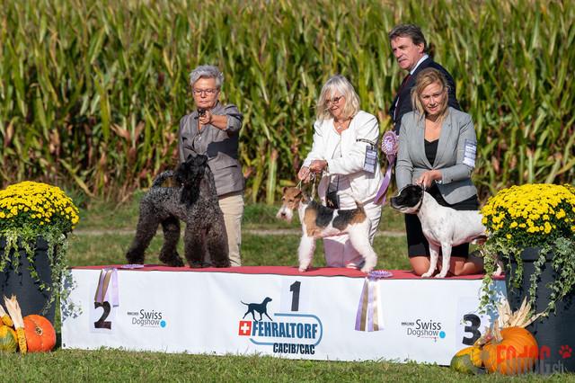{event}   CACIB Fehraltorf Autumn Swiss Dog auf der Pferderennbahn in Fehraltorf  09.10.2021 Foto: Leo Wyden